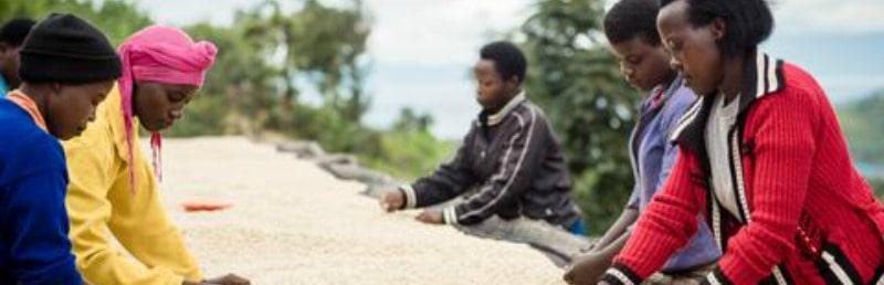 Bwishaza – Rwandan Coffee with a Taste of Strawberry and Orange