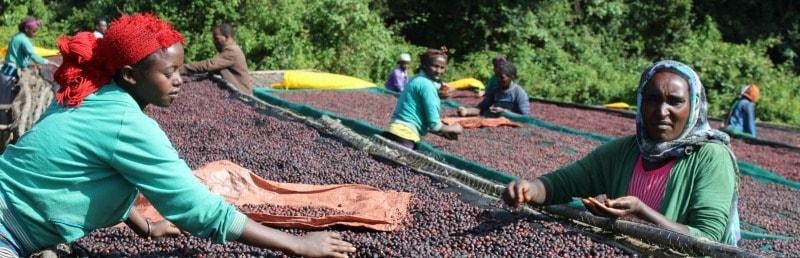 Kochere Debo – a Funky Ethopian Coffee Blend