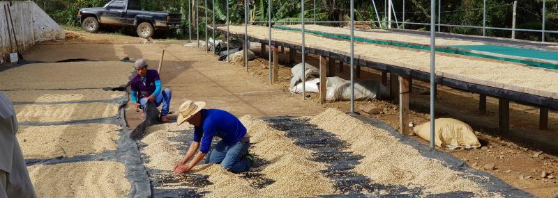 Guatemala Finca La Providencia — Coffee with Hints of Hazelnut, Apple, Raisins and Chocolate