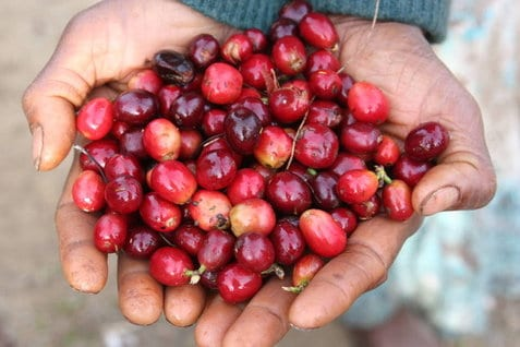 Papua New Guinea Elimbari B