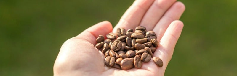 Coffee Beans- Detailed Guide to the 4 Main Types