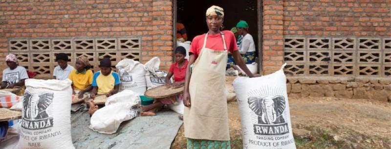 Rwanda Nyungwe – notes of cranberry orange and cocoa
