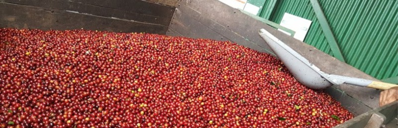 Los Robles- Costa Rican Coffee with Hints of Blackberry, Pomegranate, and Cranberry