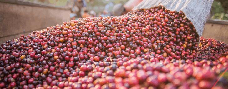 Ihani – Ugandan Coffee with Hints of White Peach Orange and Chocolate